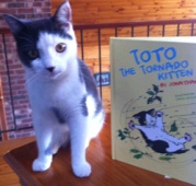 totonbook