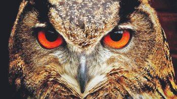 owl-770x433